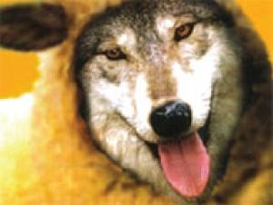 wolf-sheep080821-3